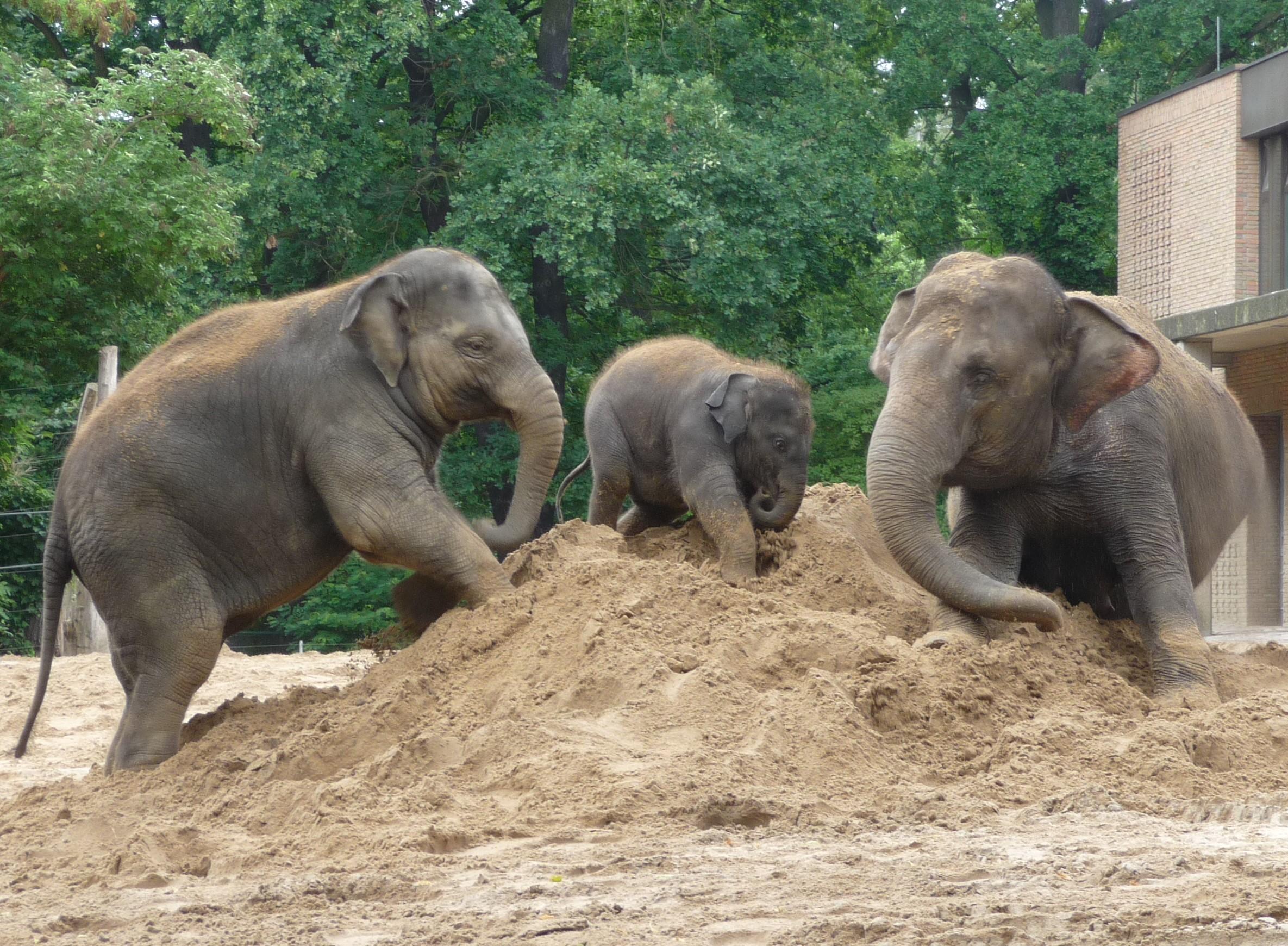 Elefanten im Zoo_Archiv EEG